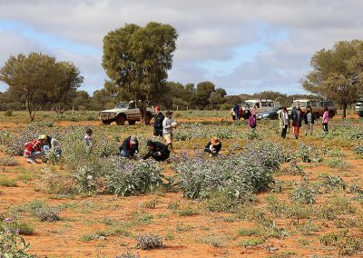 Children and Staff gathering wild fruits out in the desert